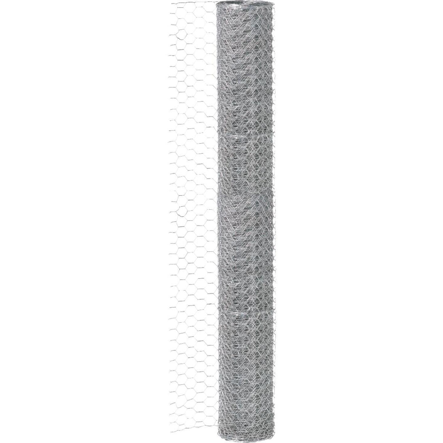 1 In. x 36 In. H. x 10 Ft. L. Hexagonal Wire Poultry Netting Image 3